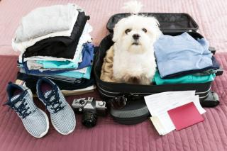 Dog Breeds That Make The Best Travel Companions