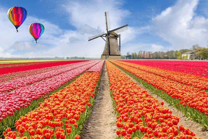 Tulip Fields, Netherland