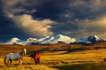 7 Reasons Why Mongolia Should Be Your Next Travel Destination