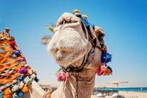 Things To Do In Dubai: March Edition